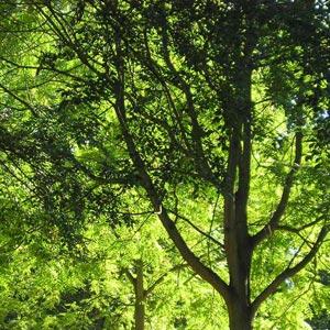 Árboles. Fotos