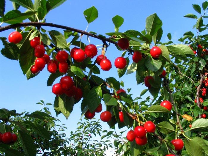 Rboles frutales for Jardines redondos pequenos