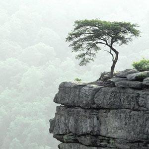 Fotos de árboles. Paisajes