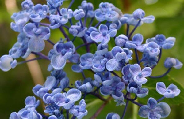 Tipos de arbustos - Nombres de arbustos ...