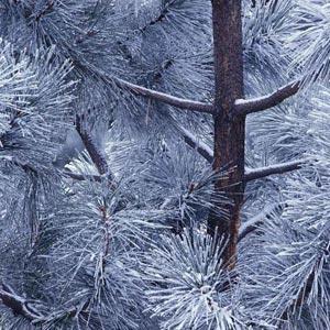 Imágenes de árboles en invierno