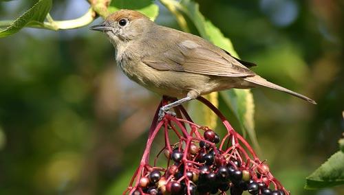 Arbustos y pájaros