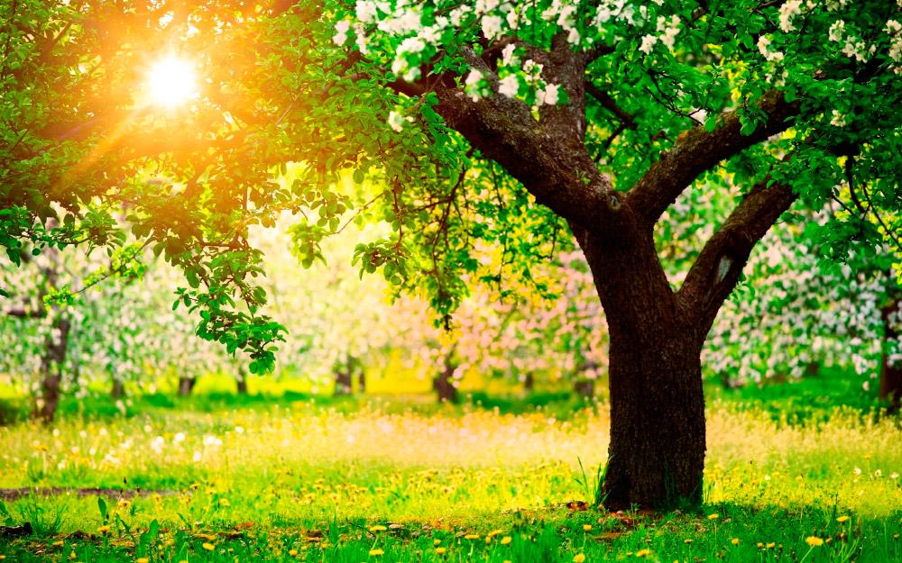 Rboles y arbustos for Imagenes de arboles ornamentales
