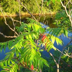 fotos de árboles. Río
