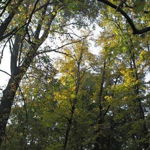 Imágenes de árboles. Bosque