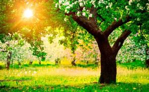 Importancia de los árboles